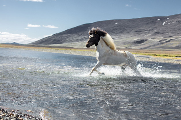 Ancient Trails & An Ancient Breed: The Ultimate Horseback Adventure in Iceland