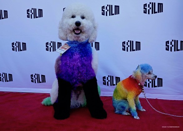 well groomed, film, castro theatre, SFFILM, dog grooming, competition,